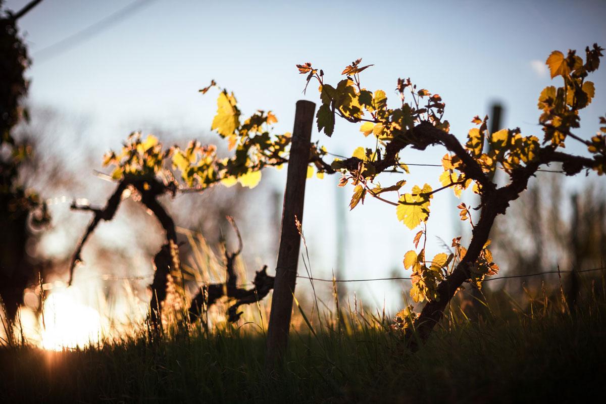 itinero.eu vin_Hongrie_viticulteur
